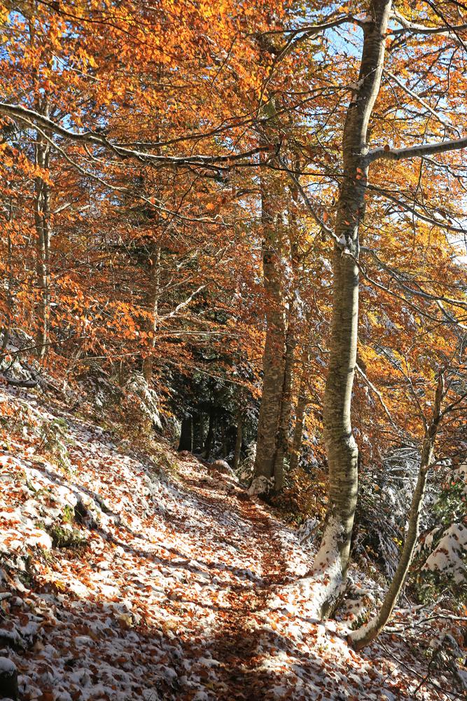 entre automne et hiver...