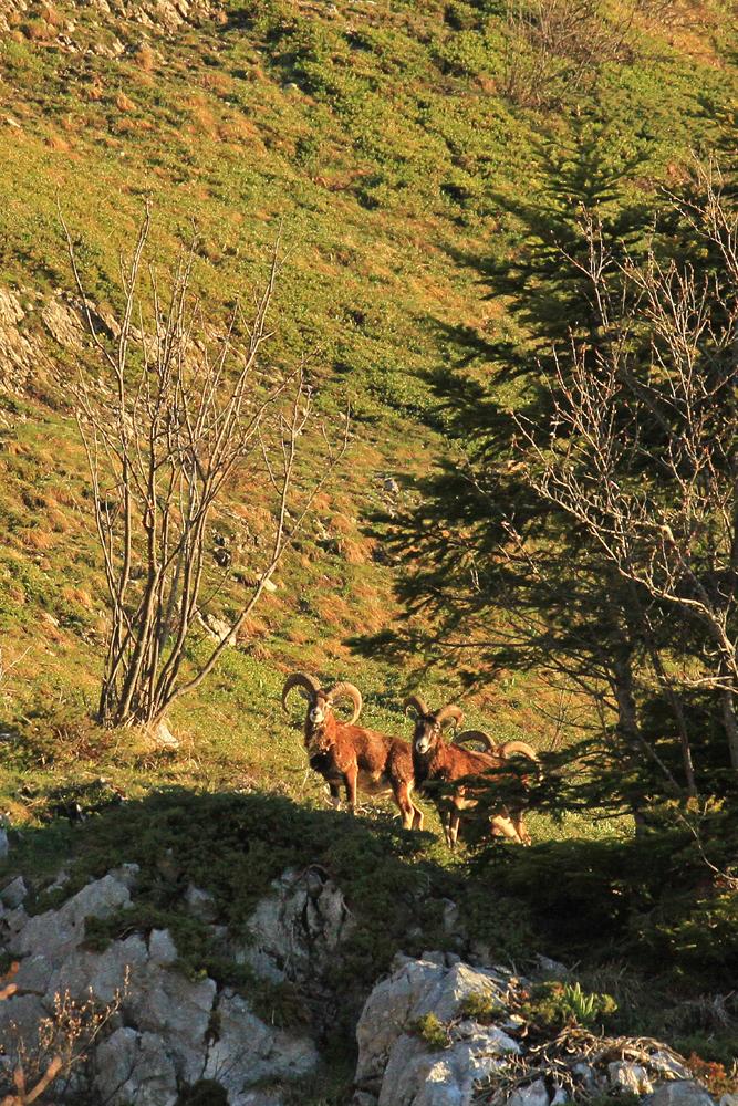 faune du Vercors