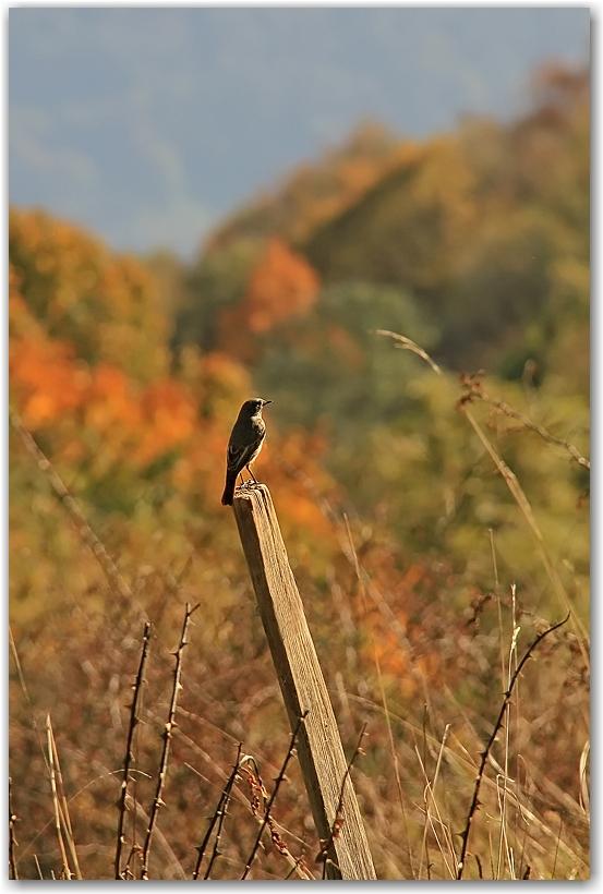 un midi d'automne en Chartreuse