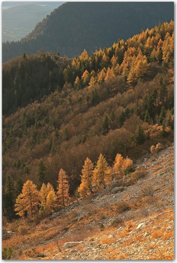 automne en or